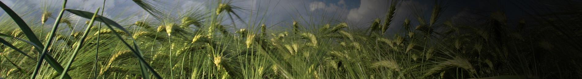 Harvesten -Grafische zorg